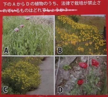 外来植物.jpg